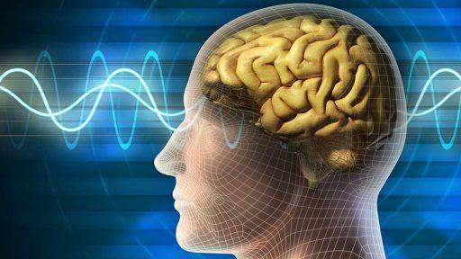 Влияние вируса герпеса на функции головной мозга